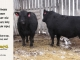 black-angus-bull-for-sale-5201_5452_8550