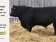 black-angus-bull-for-sale-5246_8545