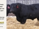 black-angus-bull-for-sale-5247_8525