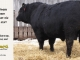 black-angus-bull-for-sale-5247_8536