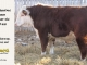 de-horned-hereford-bull-for-sale-1615_8675