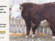 de-horned-hereford-bull-for-sale-1628_8688