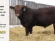 red-angus-bull-for-sale-2096_8221