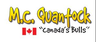 """M.C. Quantock """"Canada's Bulls"""""""