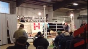 MC Quantock Bull Sale Video Of High Seller